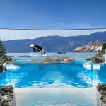 SeaWorld eliminará los espectáculos teatrales con Orcas